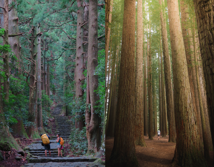 Redwood National Park met een huurauto